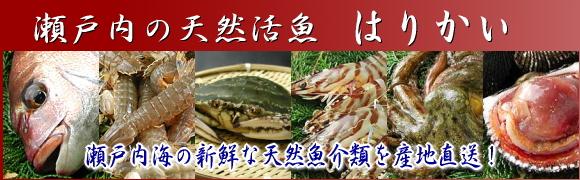 シャコ・ワタリガニ 他 瀬戸内海 活魚鮮魚卸売