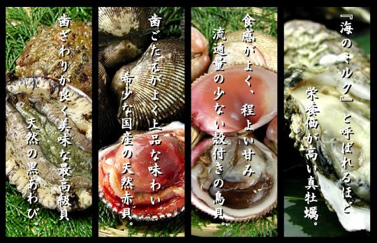 瀬戸内海播磨灘の貝類