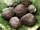瀬戸内産 天然赤貝