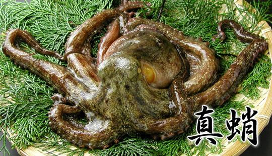 瀬戸内産 真蛸